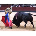 Bullfighting arms